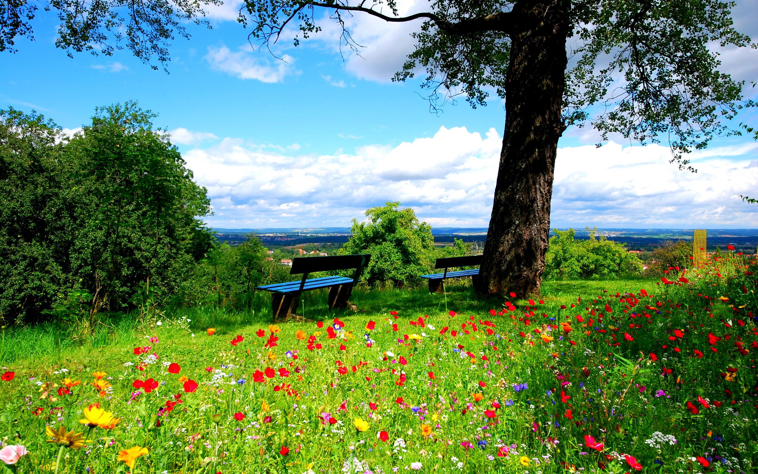 65910 download wallpaper Nature, Trees, Flowers, Benches screensavers and pictures for free