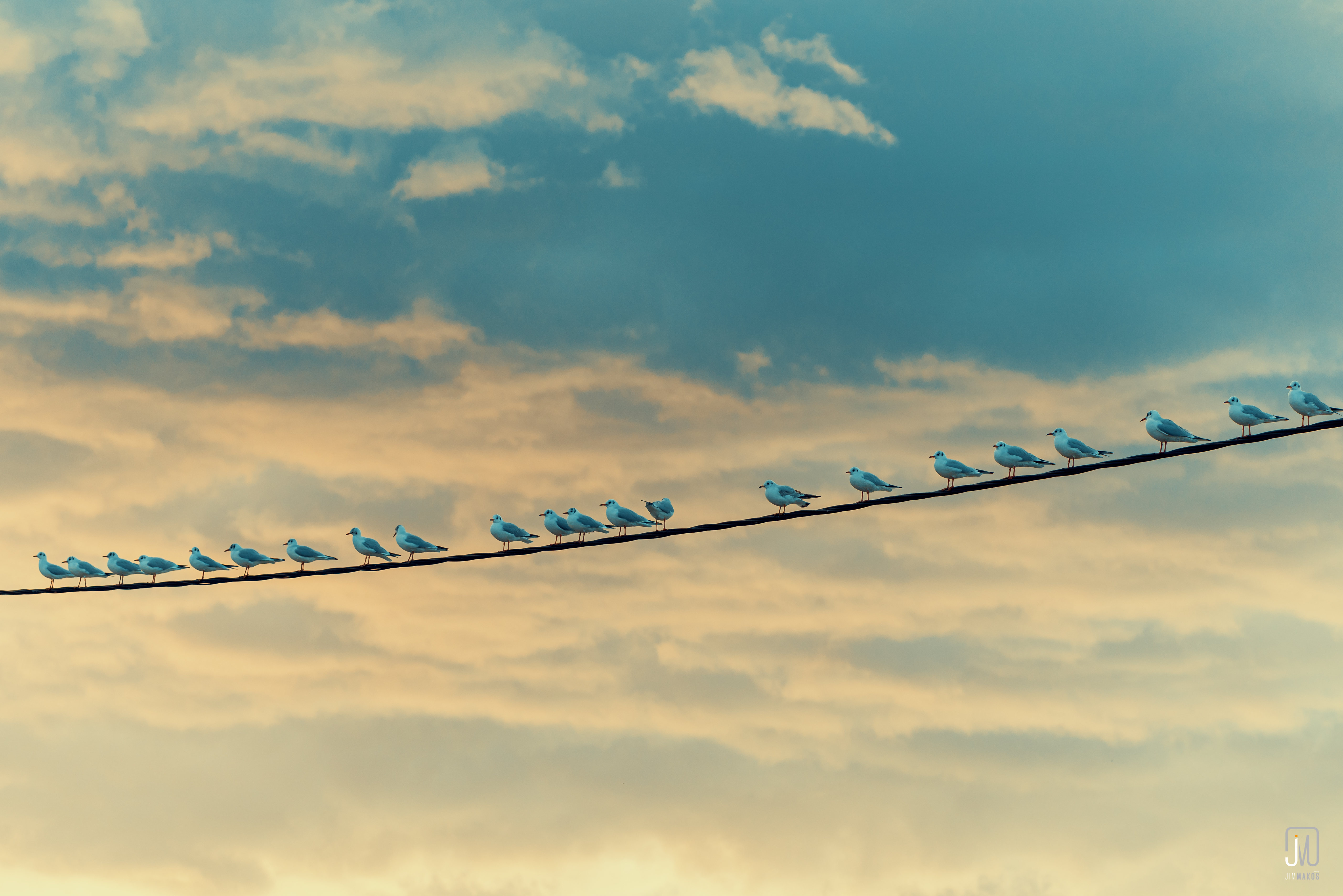 154708 download wallpaper Animals, Wire, Sky, Birds, Seagulls screensavers and pictures for free