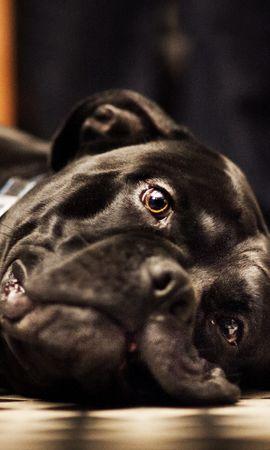 46025 baixar papel de parede Animais, Cães - protetores de tela e imagens gratuitamente
