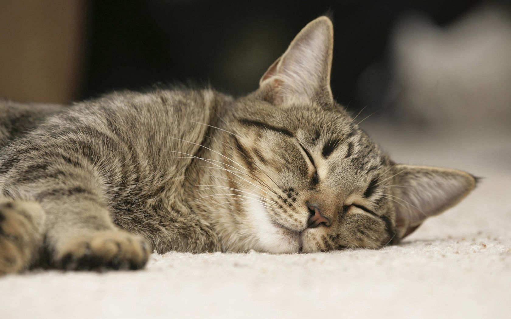 61651 download wallpaper Animals, Cat, Muzzle, Sleep, Dream, Nice, Sweetheart screensavers and pictures for free