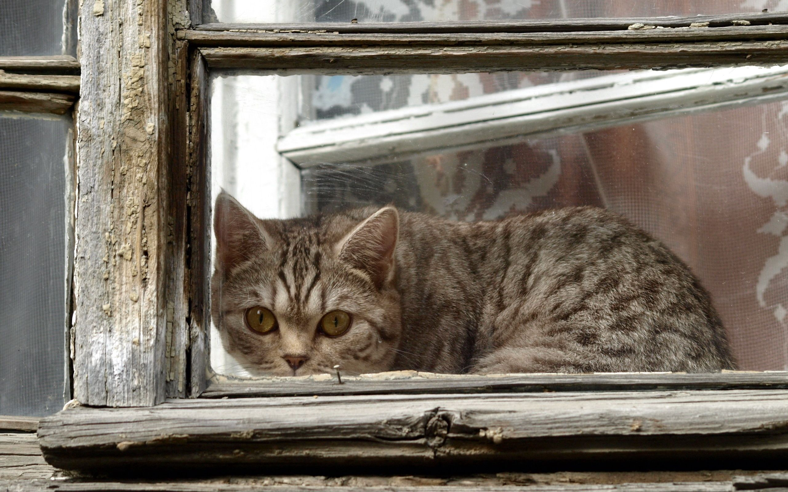 91612 download wallpaper Animals, Cat, Window, Frame, Peek Out, Look Out screensavers and pictures for free