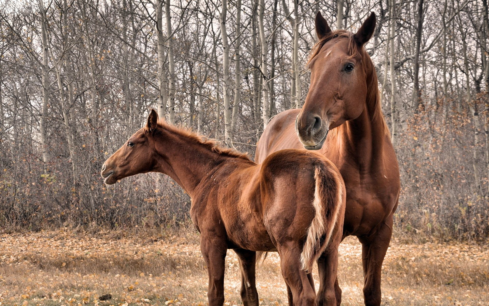 101148 Screensavers and Wallpapers Couple for phone. Download Animals, Trees, Grass, Couple, Pair, Horse, Stallion pictures for free