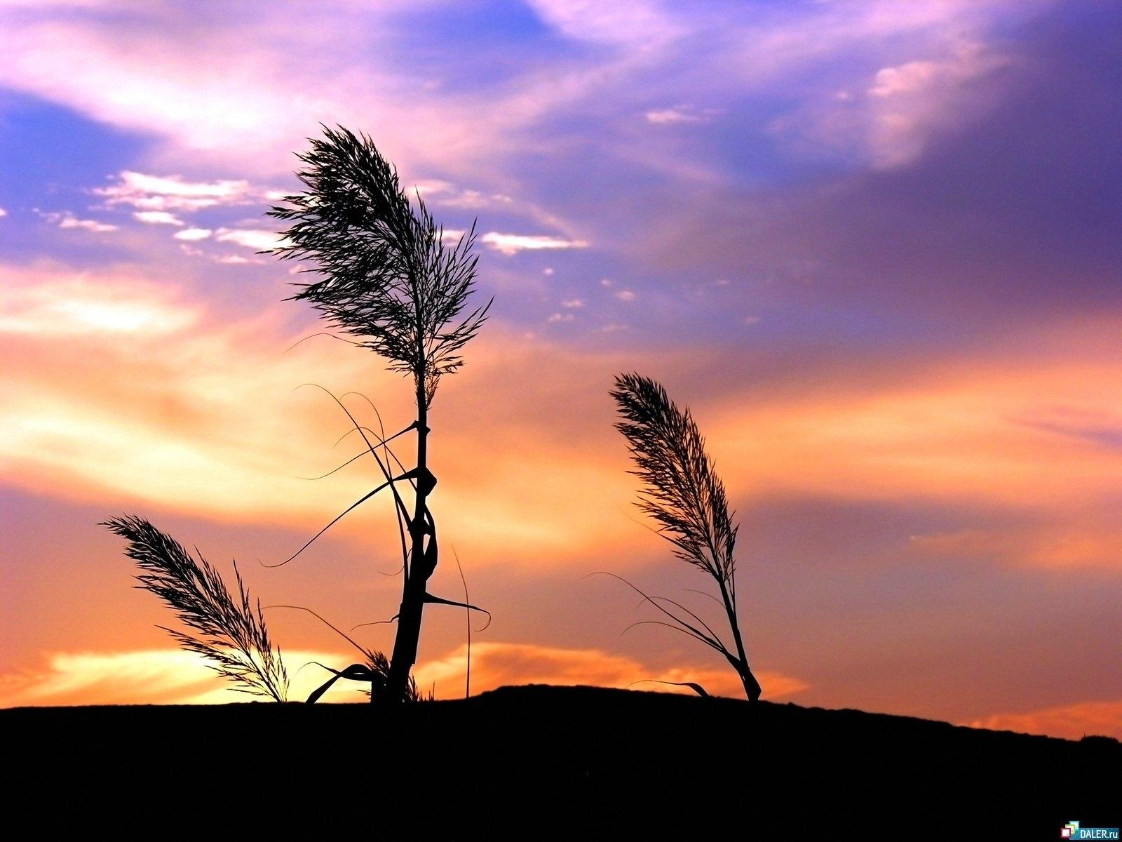 2413 скачать обои Растения, Пейзаж, Закат, Небо - заставки и картинки бесплатно