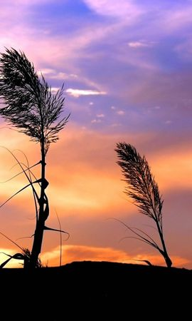 2413 descargar fondo de pantalla Plantas, Paisaje, Puesta Del Sol, Cielo: protectores de pantalla e imágenes gratis