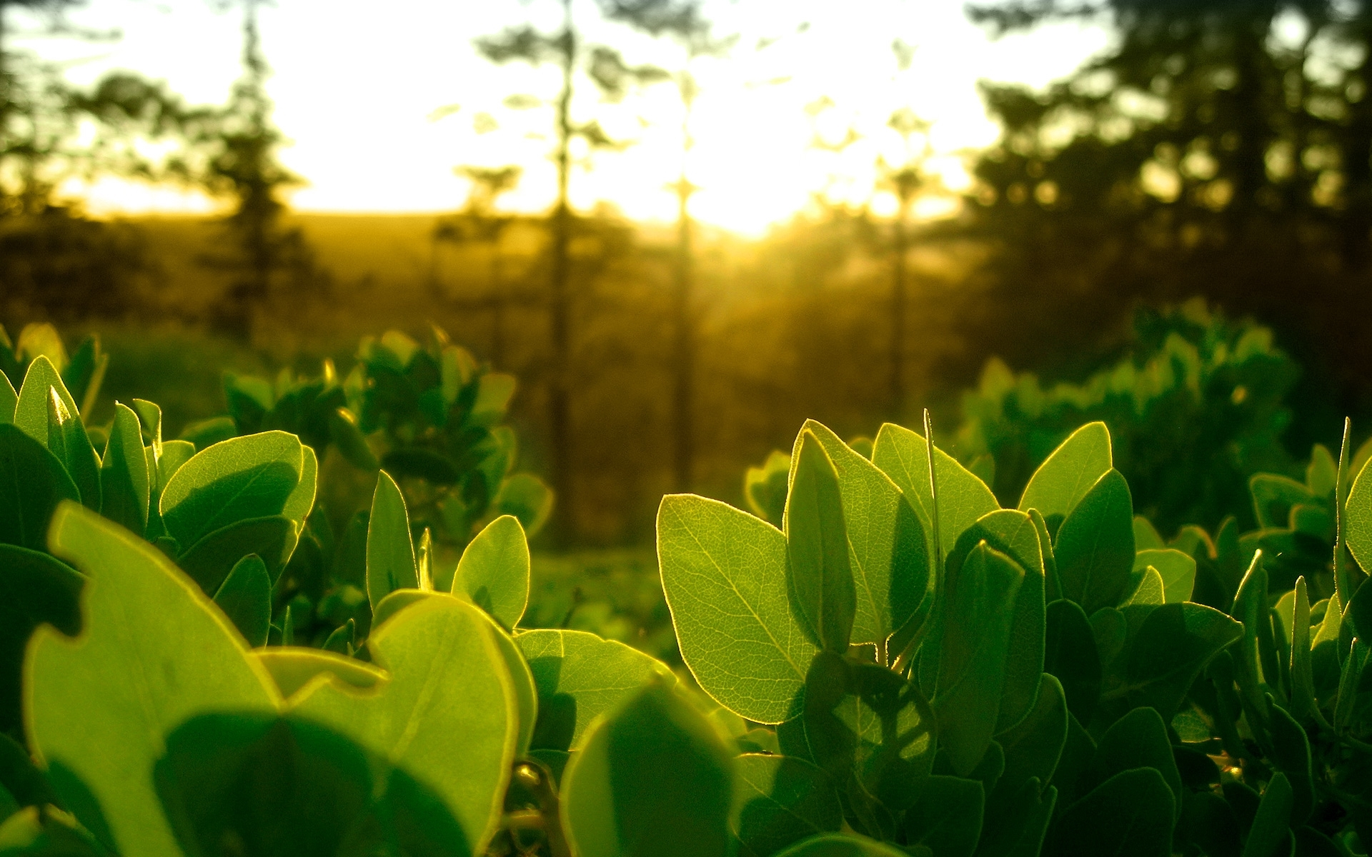23939 скачать обои Растения, Листья, Солнце - заставки и картинки бесплатно