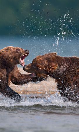 40717 baixar papel de parede Animais, Bears - protetores de tela e imagens gratuitamente