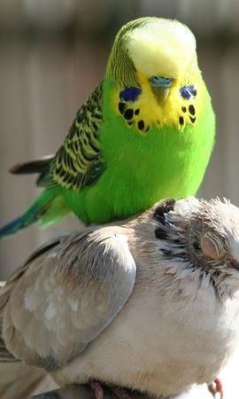 44100 baixar papel de parede Animais, Aves, Papagaios - protetores de tela e imagens gratuitamente