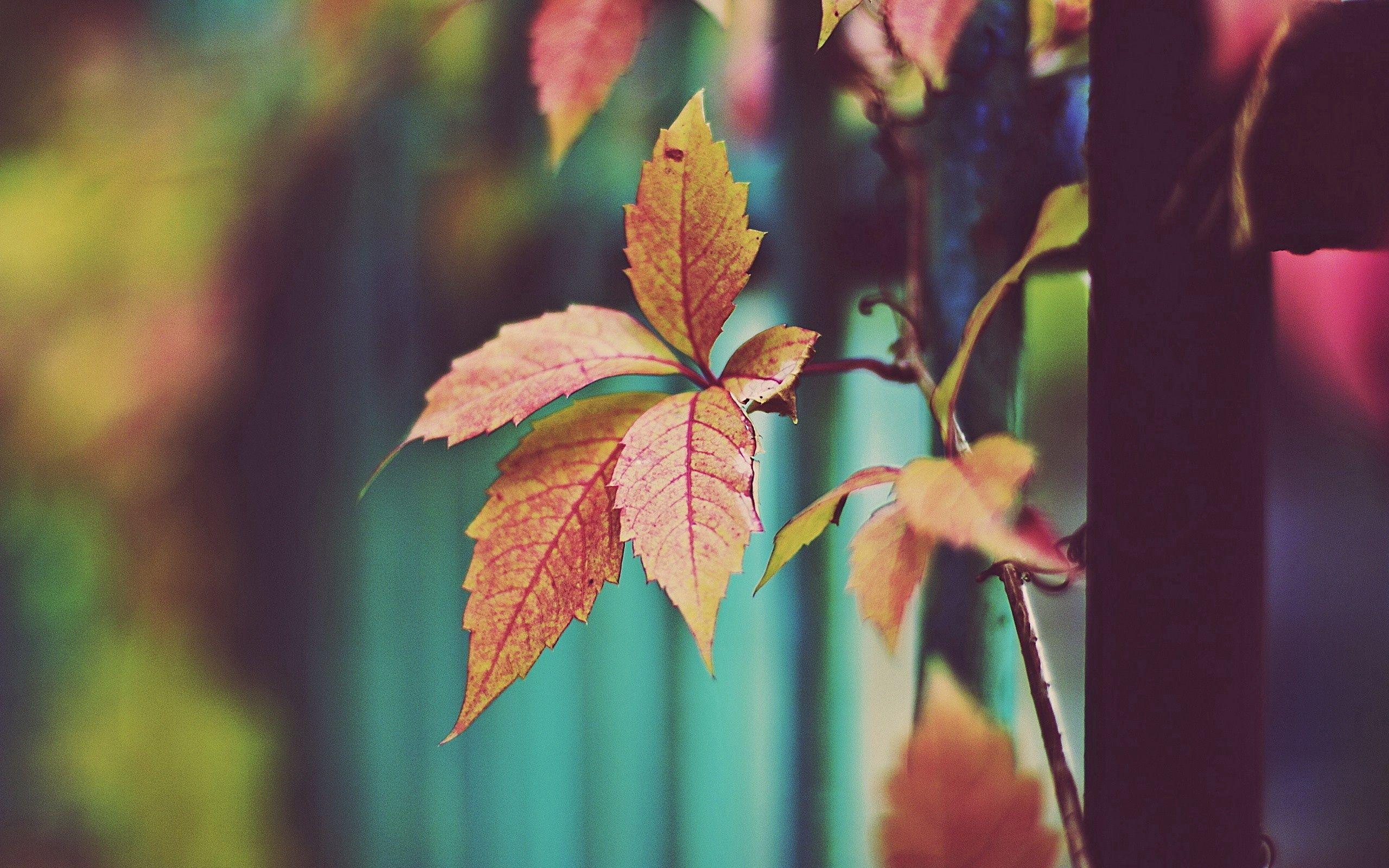 140189 Hintergrundbild 1024x600 kostenlos auf deinem Handy, lade Bilder Natur, Blätter, Pflanze, Ast, Zweig 1024x600 auf dein Handy herunter