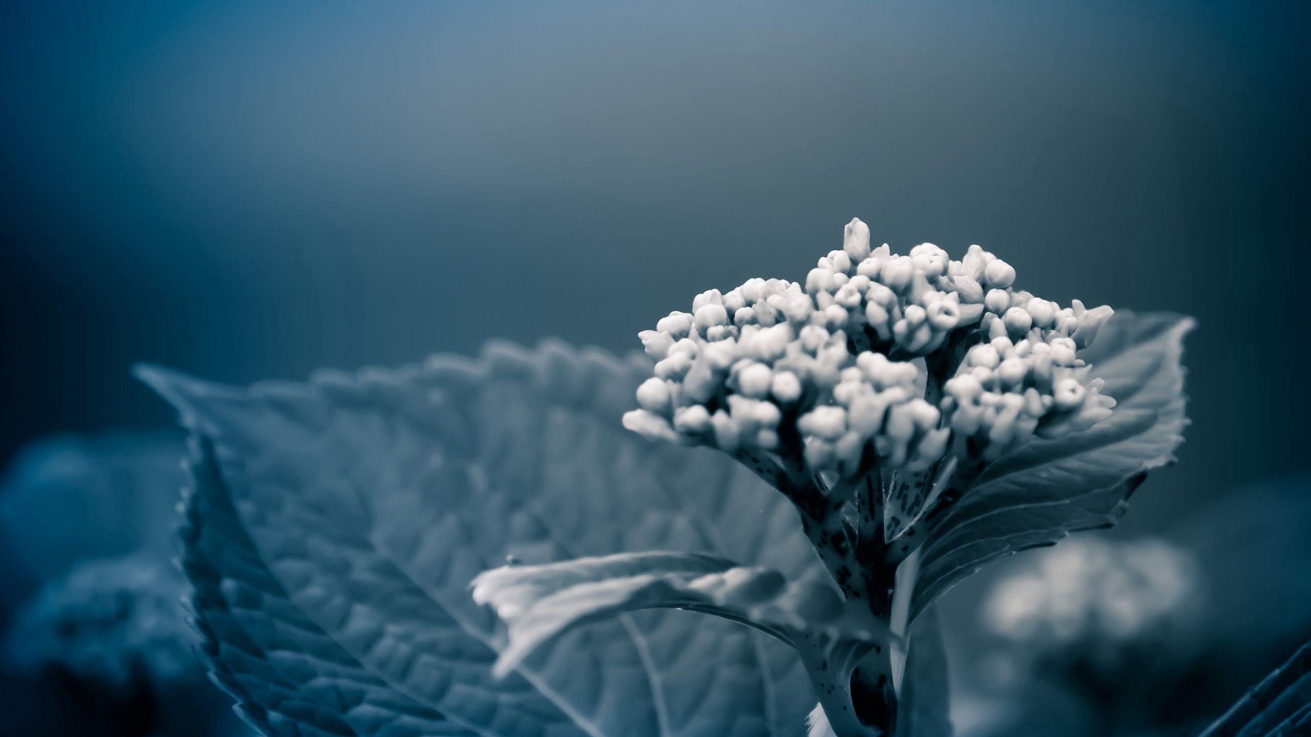 94967 скачать обои Макро, Трава, Свет, Растение, Темный, Тень - заставки и картинки бесплатно