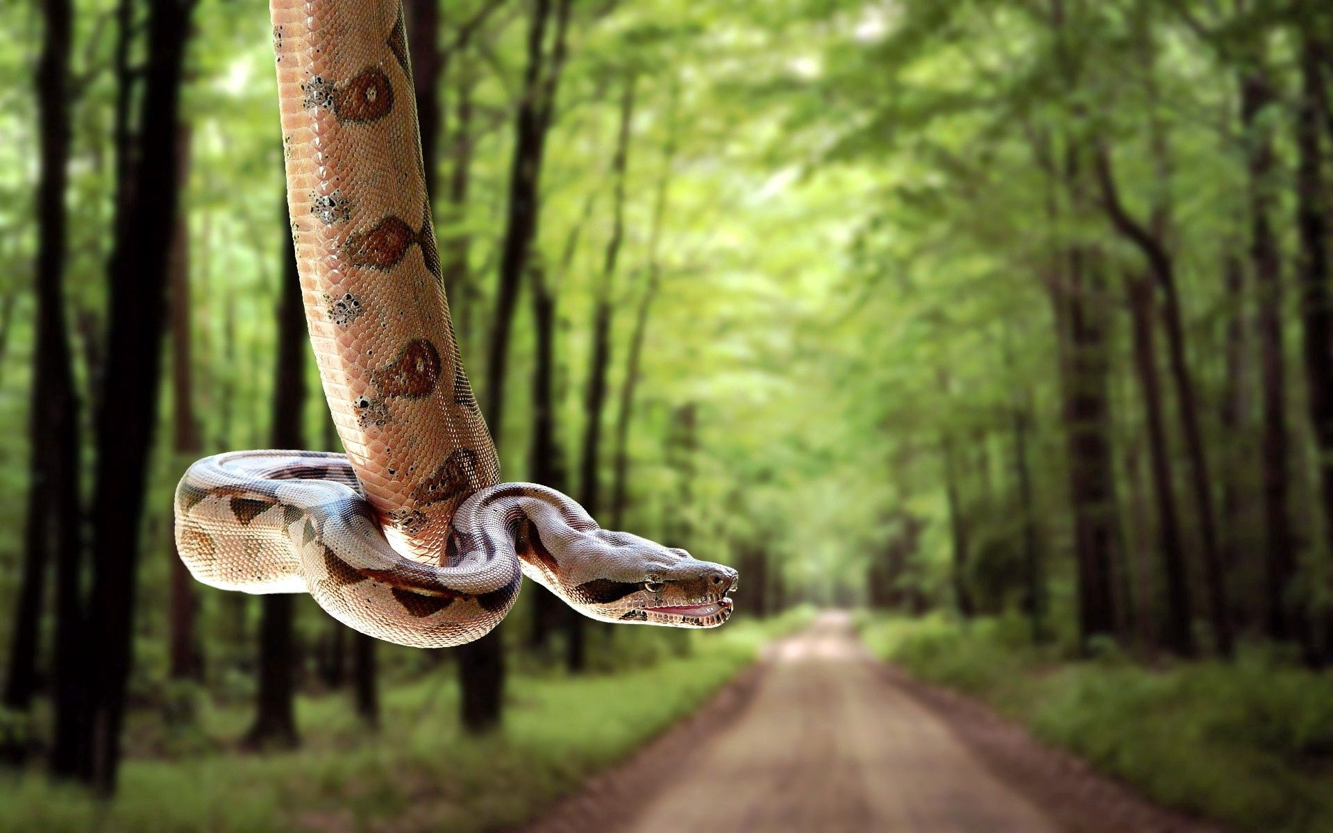 58964 Screensavers and Wallpapers Snake for phone. Download Animals, Trees, Grass, Road, Blur, Smooth, Snake pictures for free