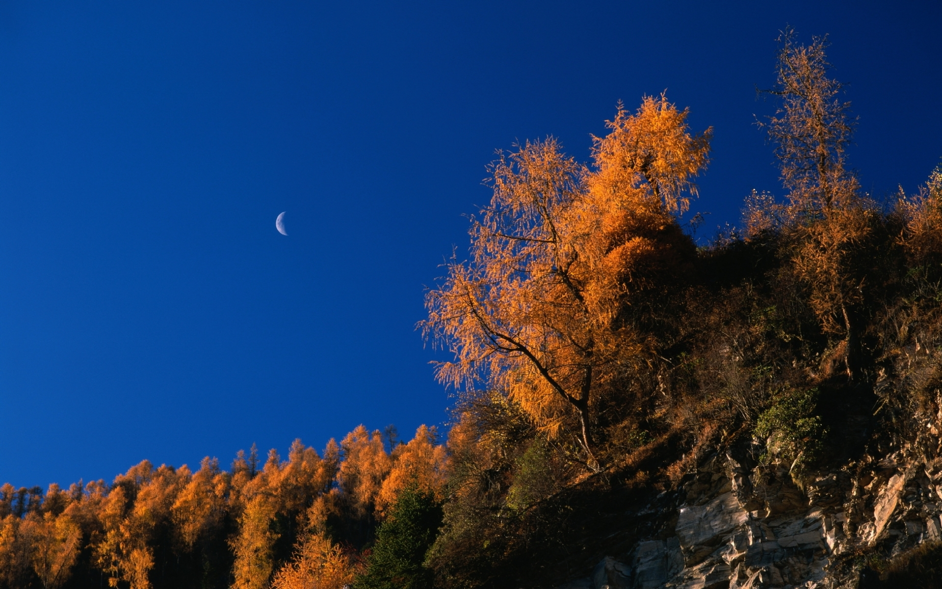 32187 download wallpaper Landscape, Trees, Autumn screensavers and pictures for free