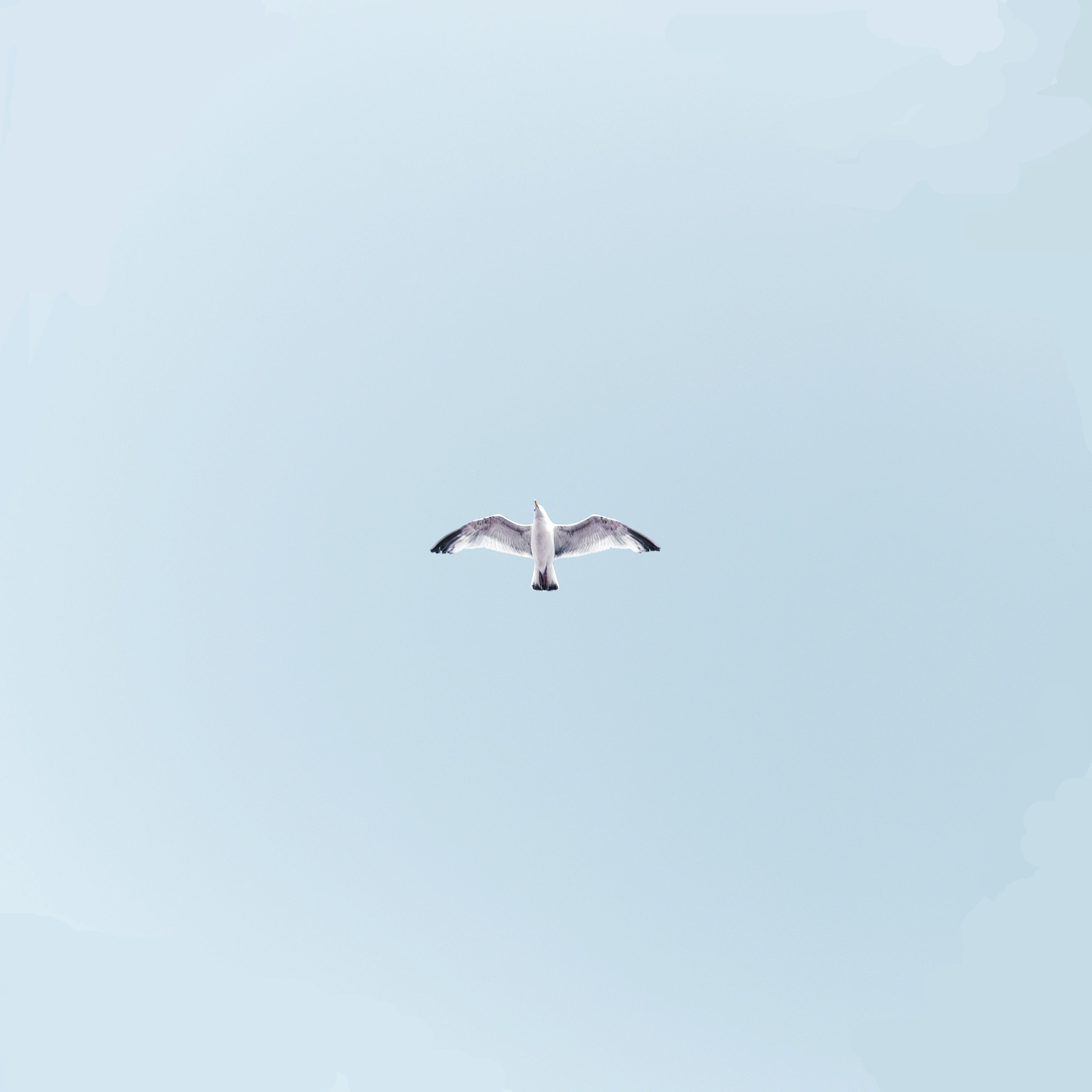 156077 download wallpaper Minimalism, Gull, Seagull, Bird, Flight, Sky, Wings, Sweep, Wave screensavers and pictures for free