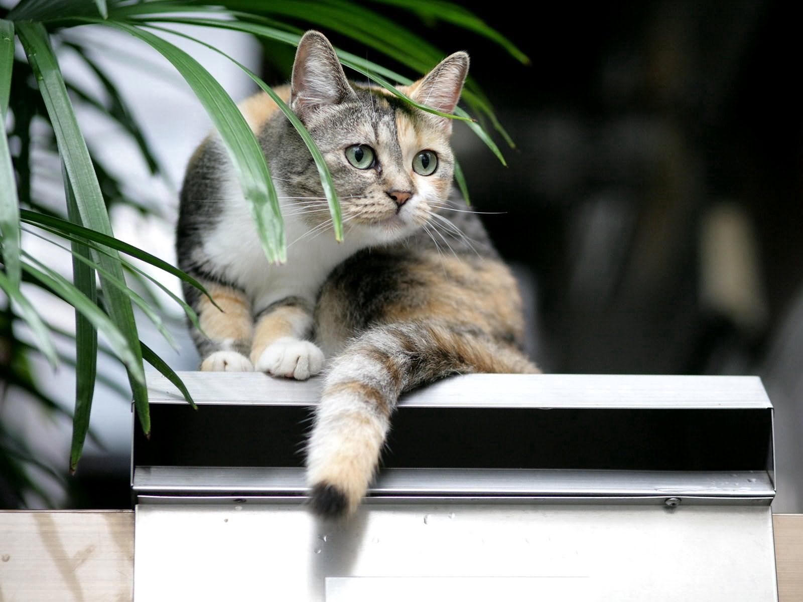 109477 Screensavers and Wallpapers Sit for phone. Download Animals, Sit, Cat, Spotted, Spotty pictures for free