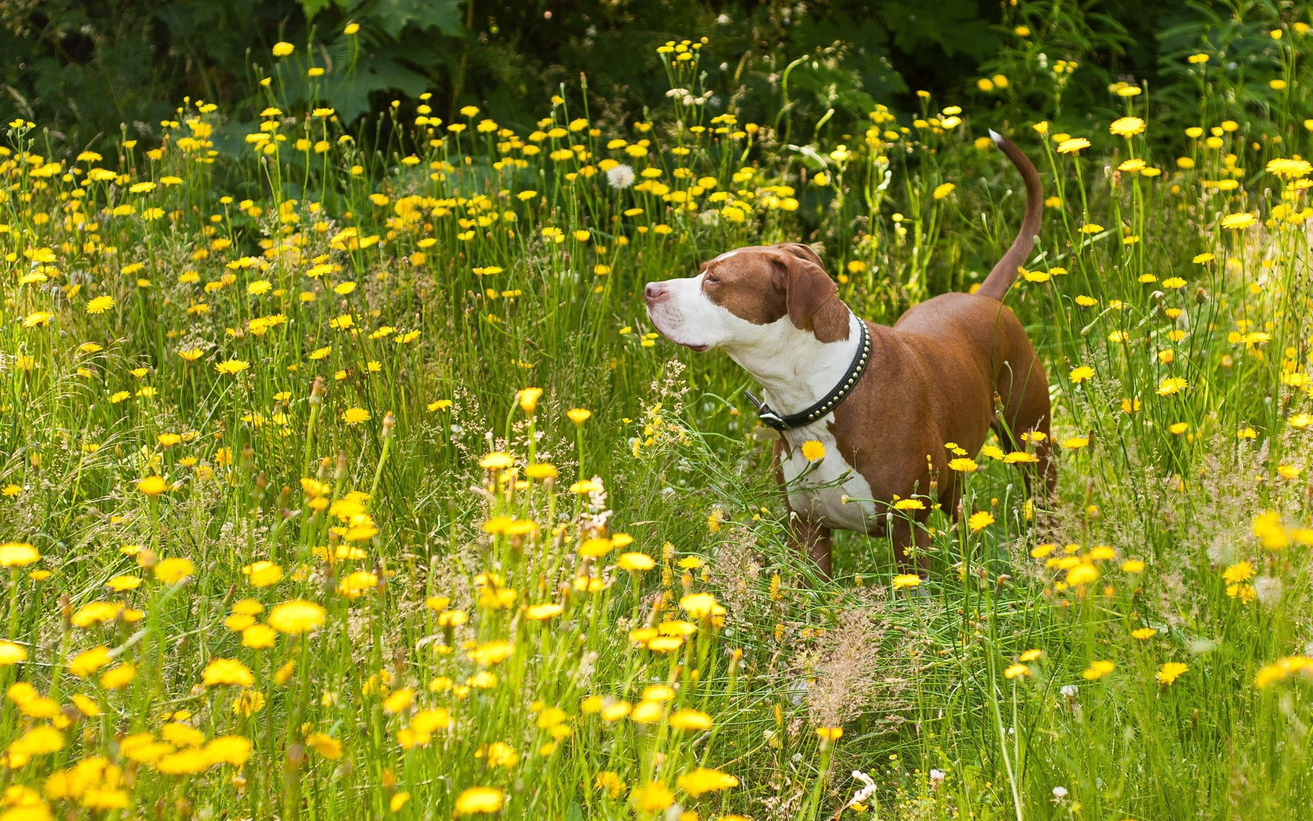 143601 download wallpaper Animals, Dog, Grass, Stroll screensavers and pictures for free