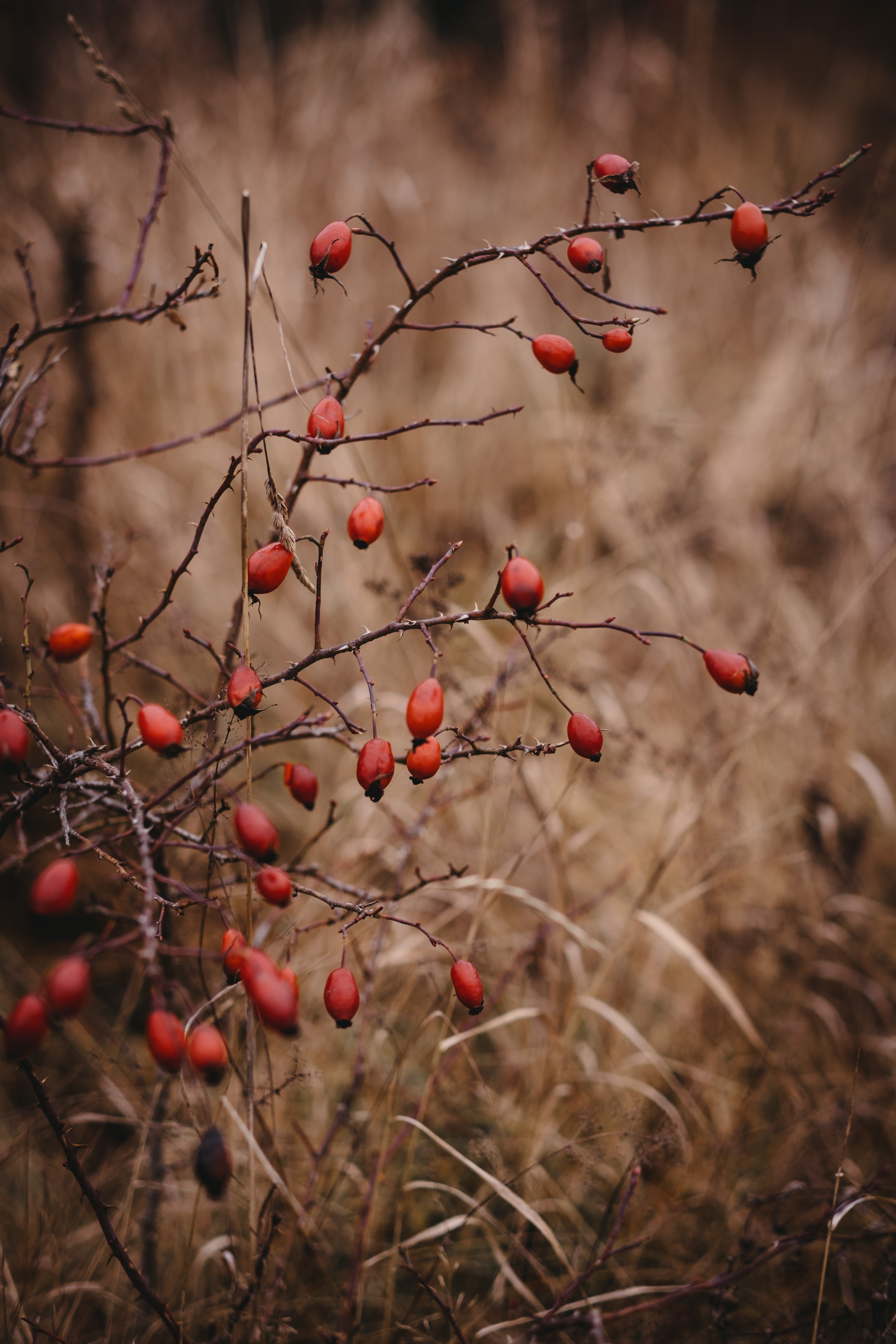 63636 download wallpaper Nature, Briar, Bush, Barbed, Spiny screensavers and pictures for free