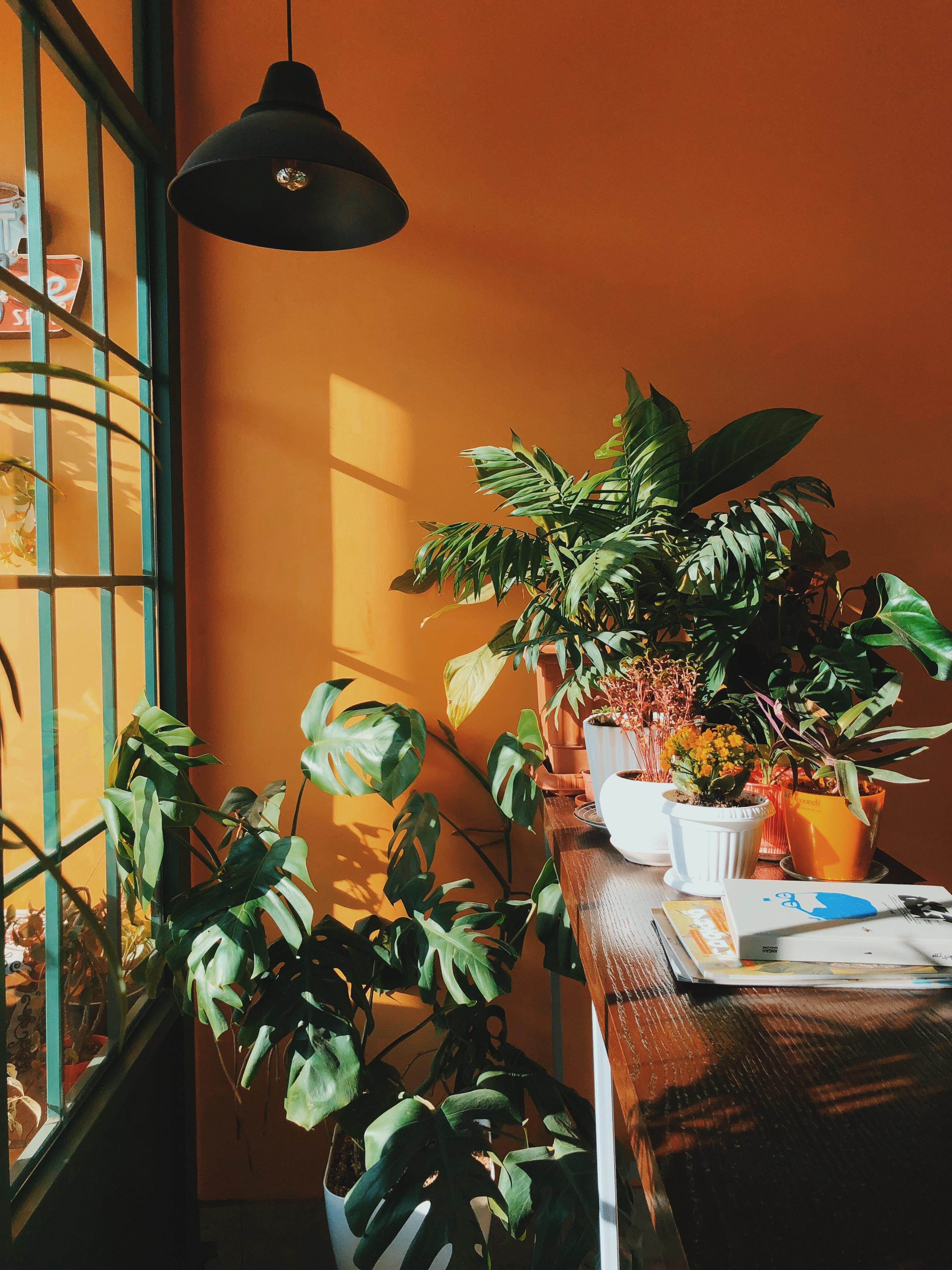 98569 скачать обои Разное, Комнатные, Декоративные, Растения, Комната, Полка, Оранжерея, Цветы - заставки и картинки бесплатно