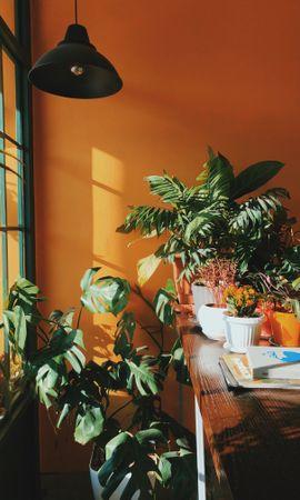 98569 descargar fondo de pantalla Miscelánea, Misceláneo, Habitación, Cuarto, Decorativo, Plantas, Estante, Invernadero, Flores: protectores de pantalla e imágenes gratis