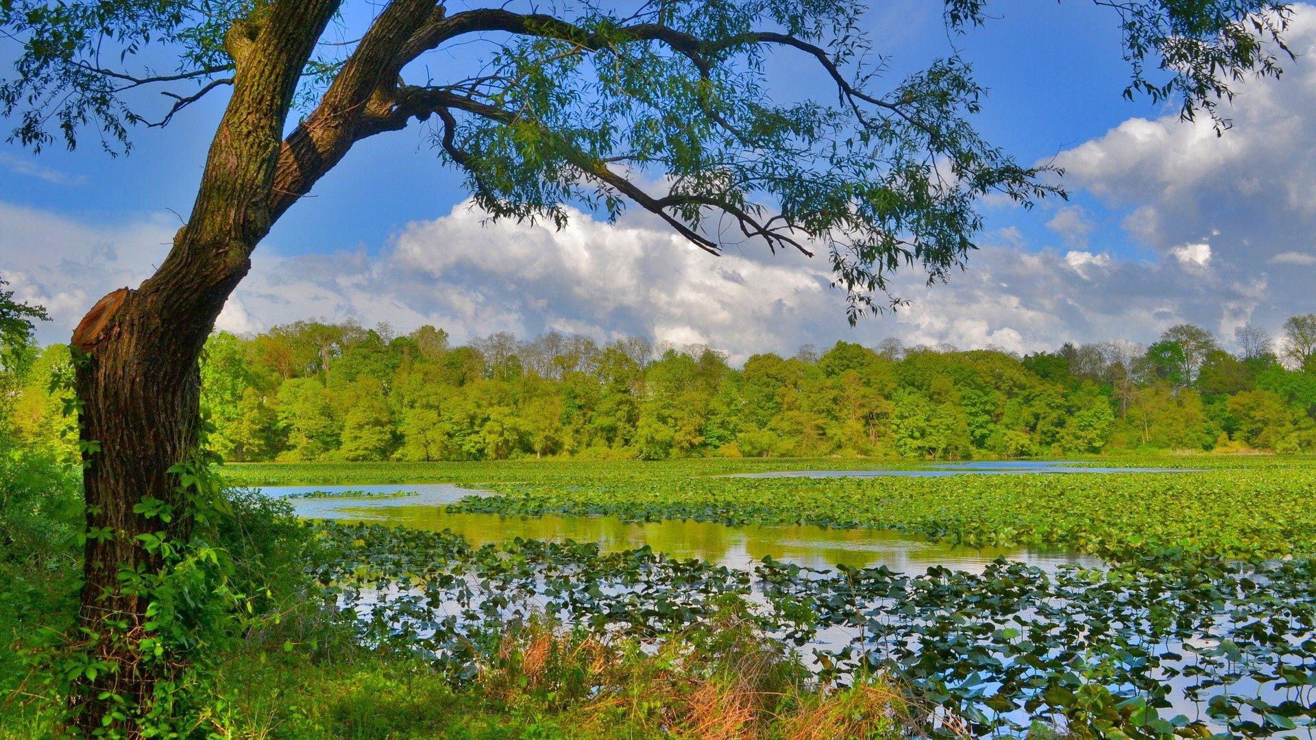 134160 fond d'écran 540x960 sur votre téléphone gratuitement, téléchargez des images Rivières, Nature, Arbres, Herbe, Marais 540x960 sur votre mobile