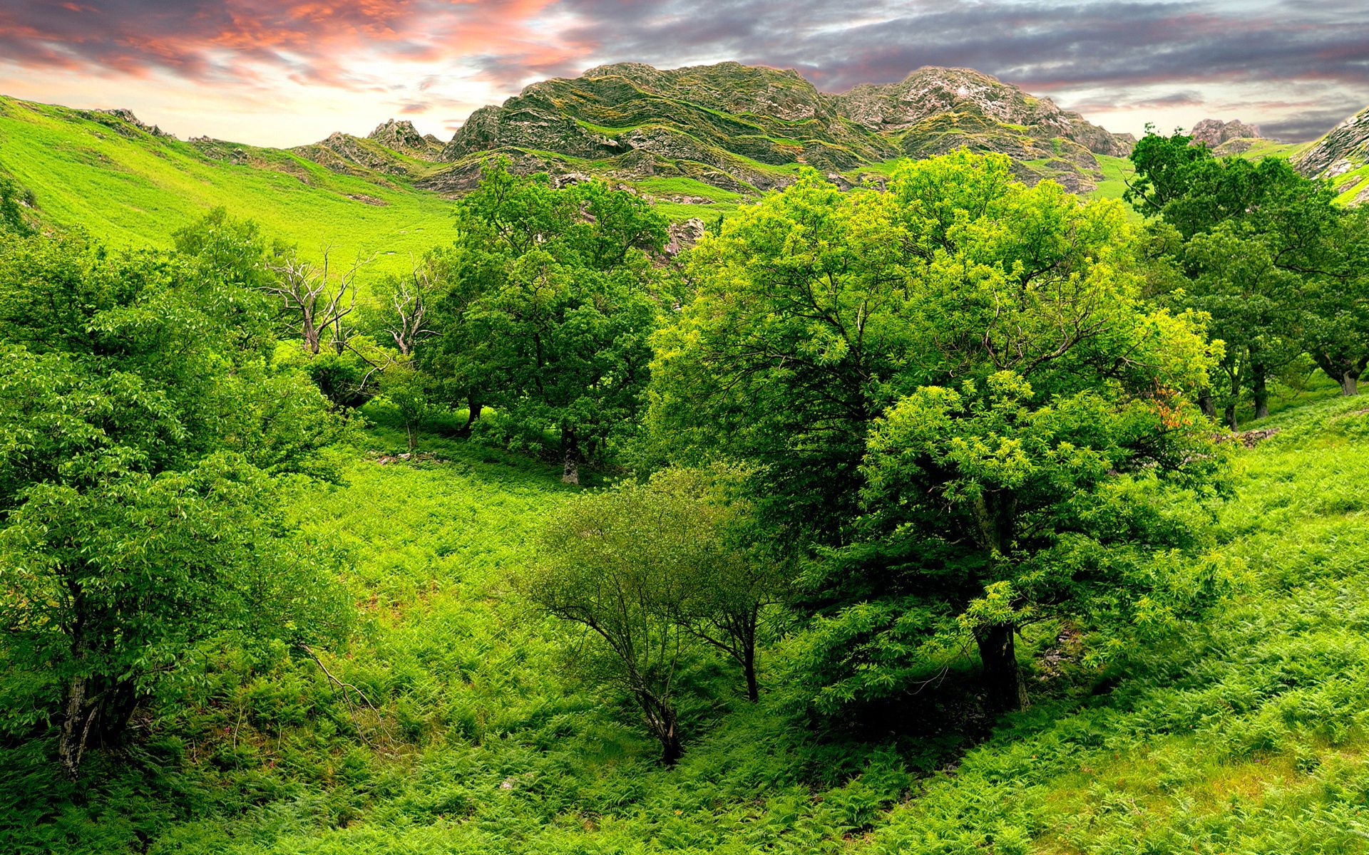 152562 Screensavers and Wallpapers Summer for phone. Download Landscape, Trees, Nature, Grass, Sky, Mountains, Summer, Relief, Brightly, Lowland pictures for free