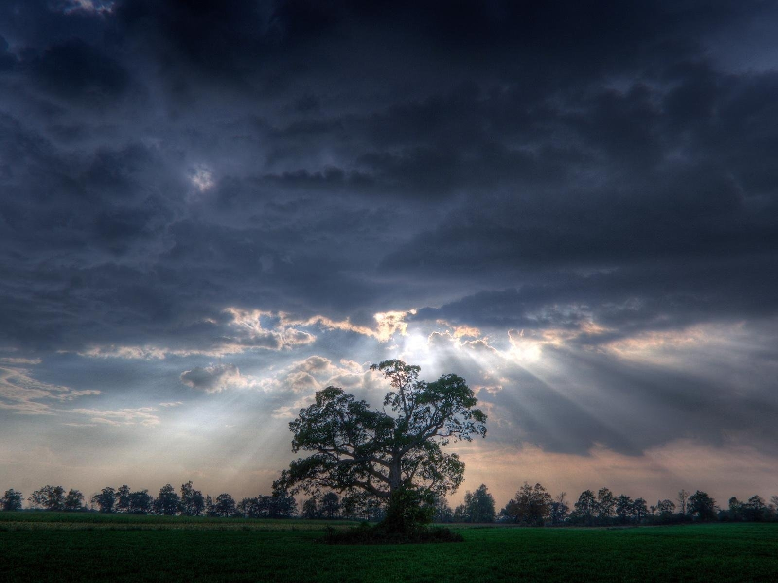 7081 download wallpaper Landscape, Trees, Sky, Art Photo screensavers and pictures for free