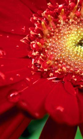 146 скачать обои Растения, Цветы - заставки и картинки бесплатно