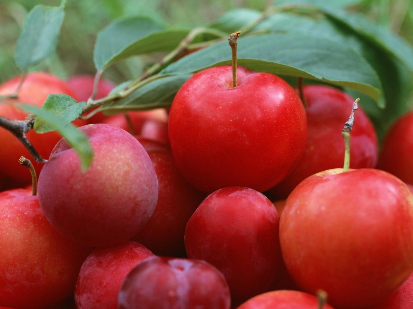 Handy-Wallpaper Obst, Lebensmittel kostenlos herunterladen.