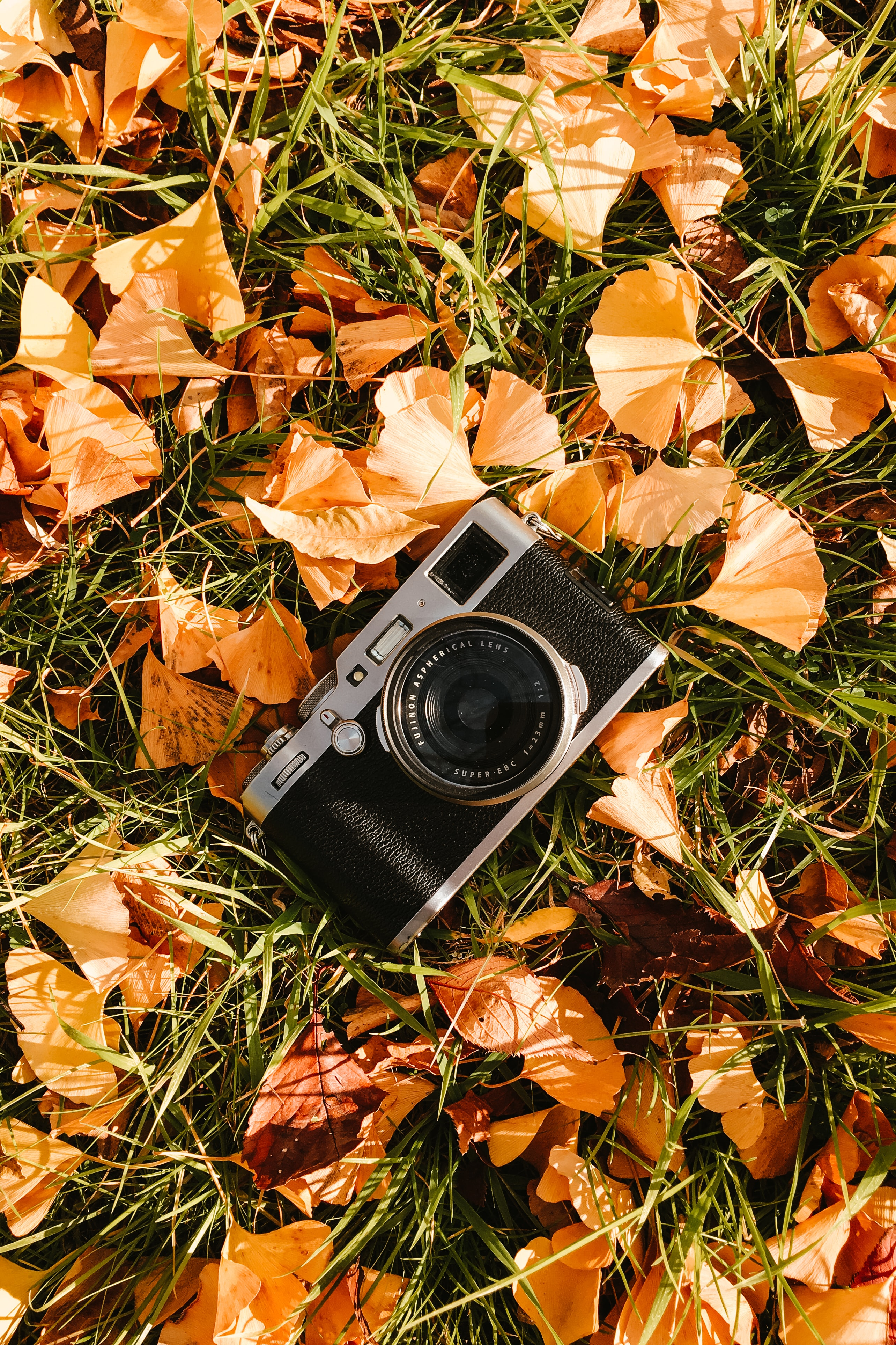 144080 download wallpaper Technology, Grass, Leaves, Technologies, Camera screensavers and pictures for free