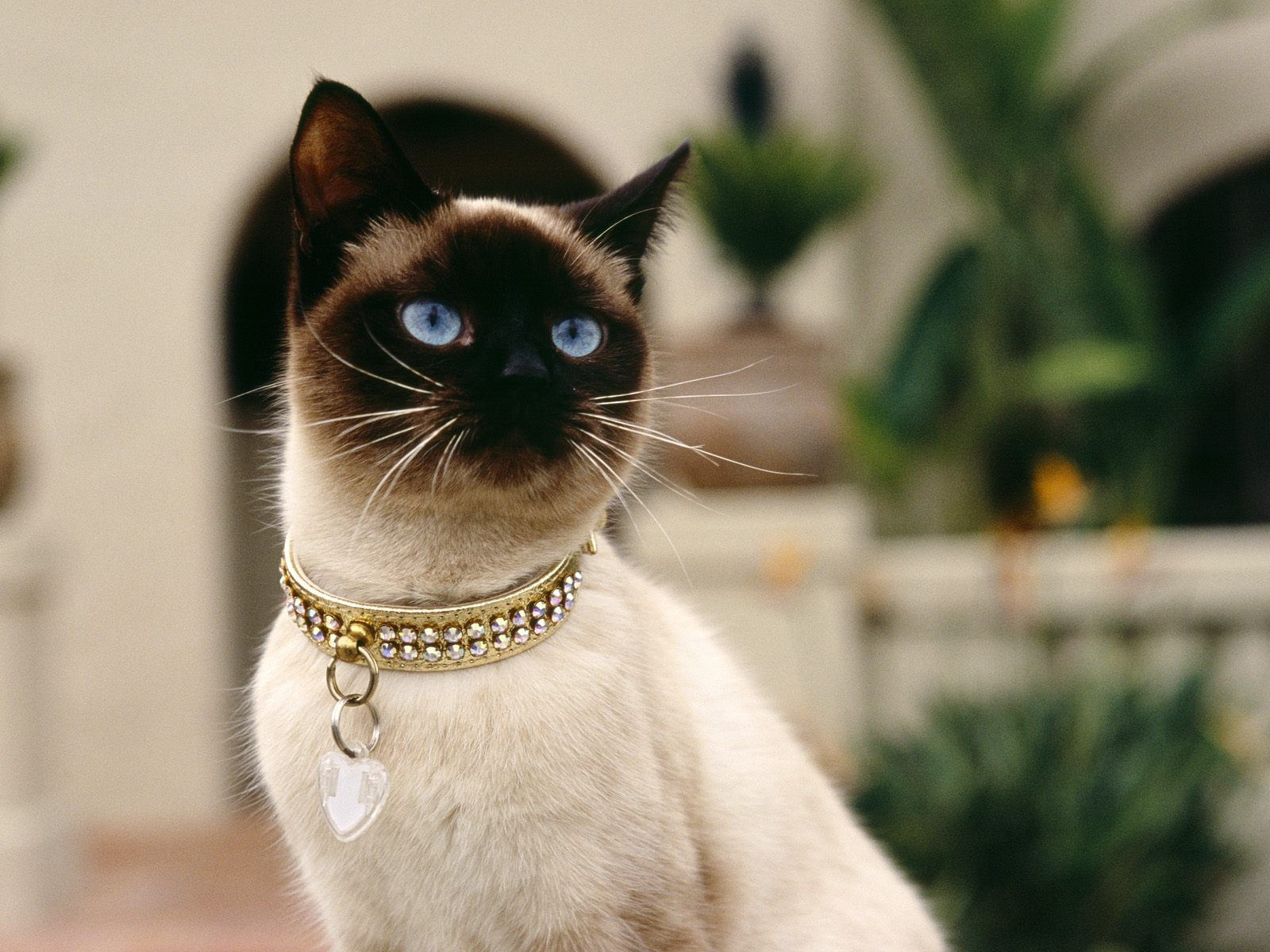 6923 download wallpaper Animals, Cats screensavers and pictures for free