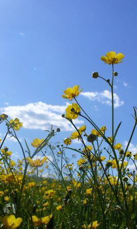 5488 скачать обои Растения, Цветы - заставки и картинки бесплатно