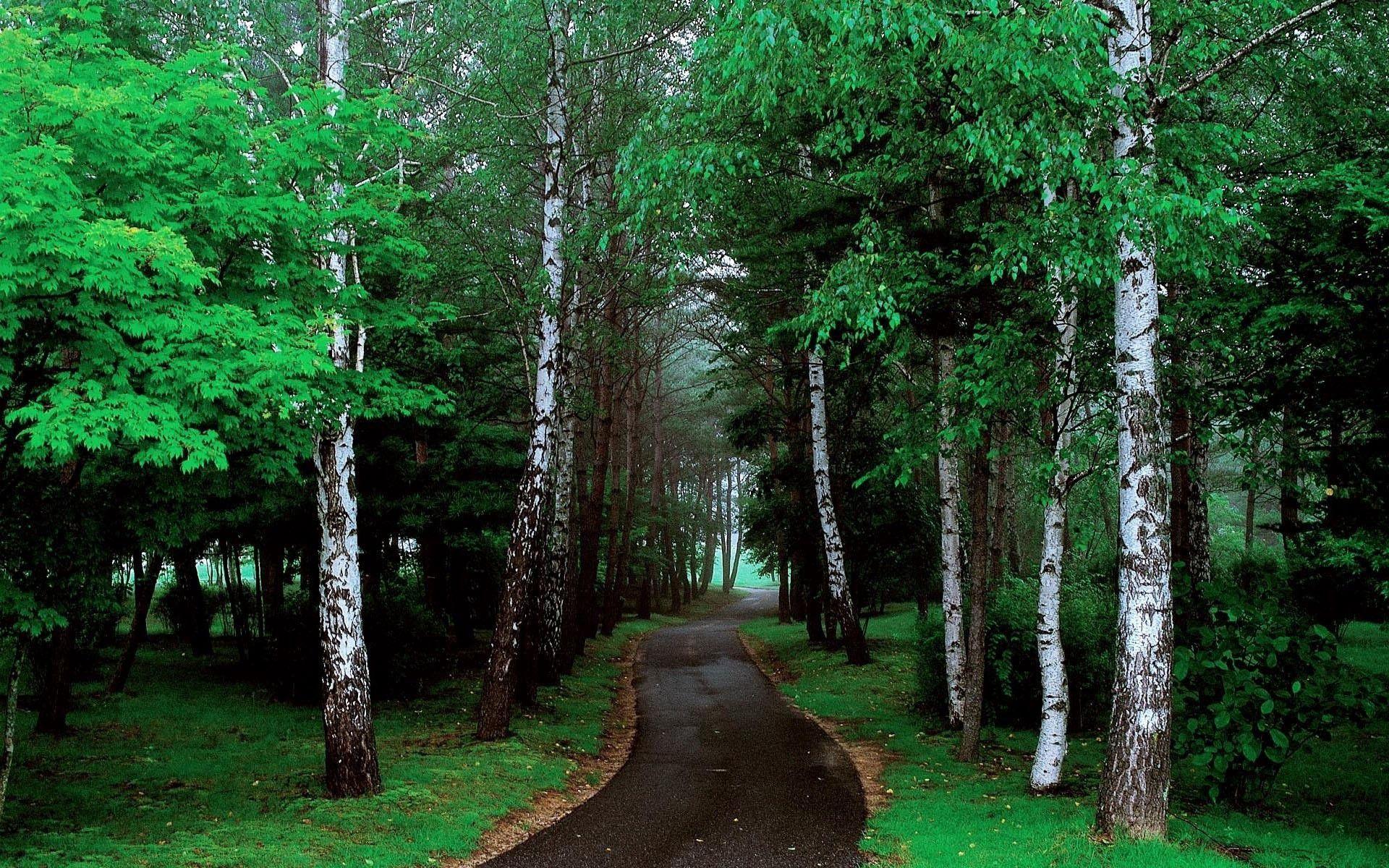 157262 fond d'écran 720x1280 sur votre téléphone gratuitement, téléchargez des images Nature, Arbres, Herbe, Route, Chemin 720x1280 sur votre mobile