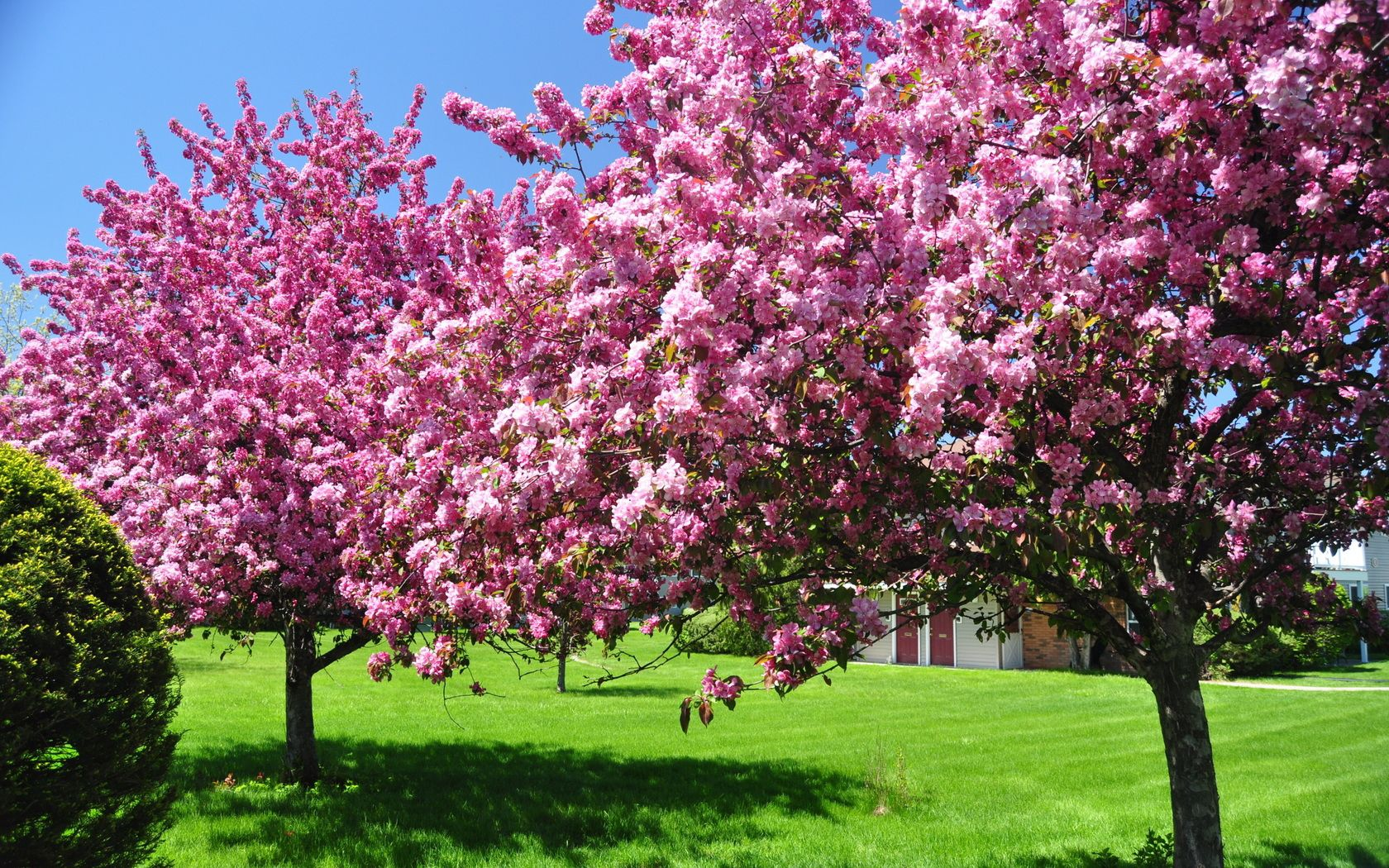 81102 free wallpaper 1080x2400 for phone, download images Nature, Trees, Pink, Garden, Spring, Courtyard, Yard, Blooming, Blossoming 1080x2400 for mobile
