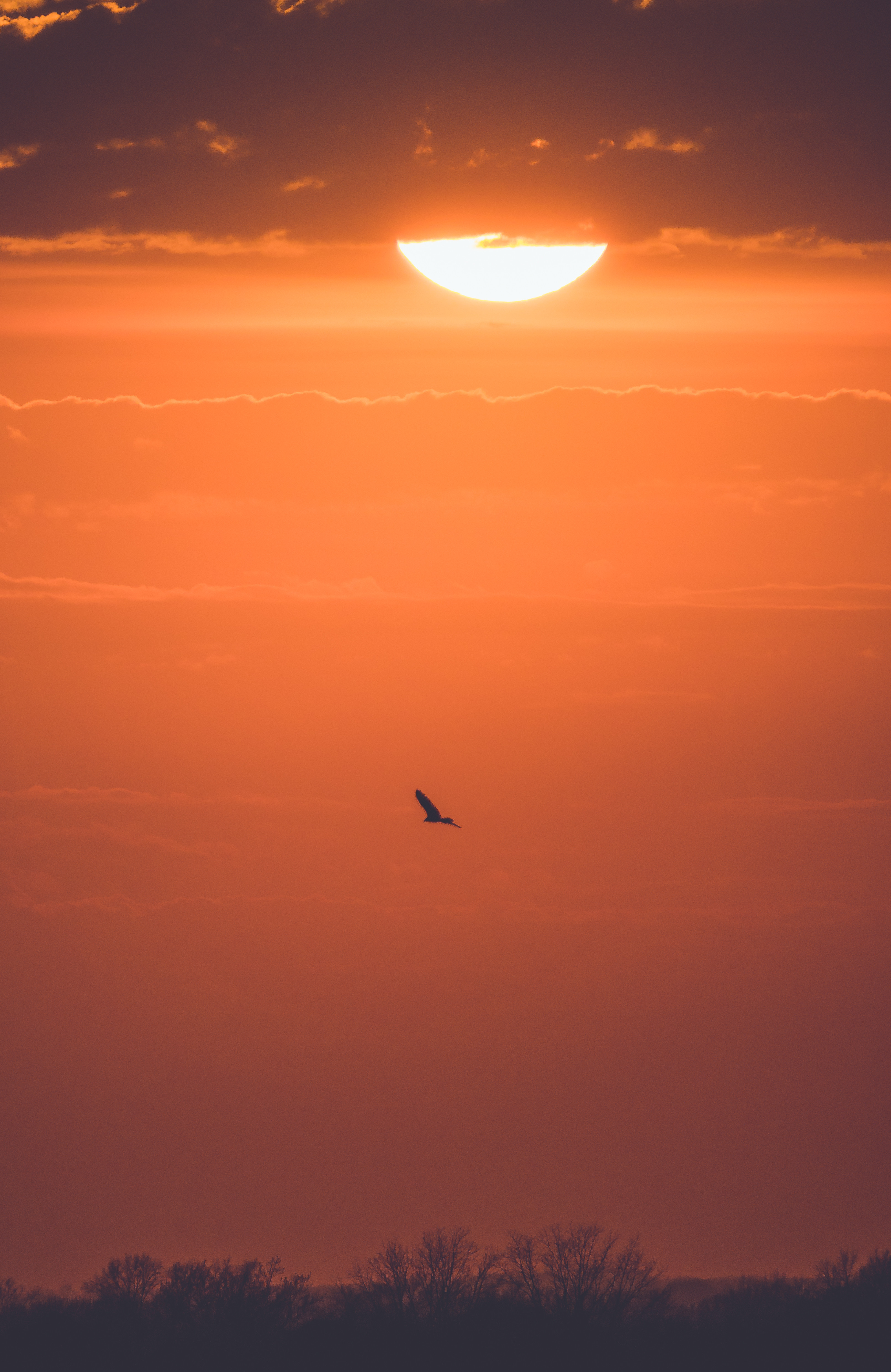 141179 download wallpaper Nature, Sunset, Bird, Branches, Sun screensavers and pictures for free