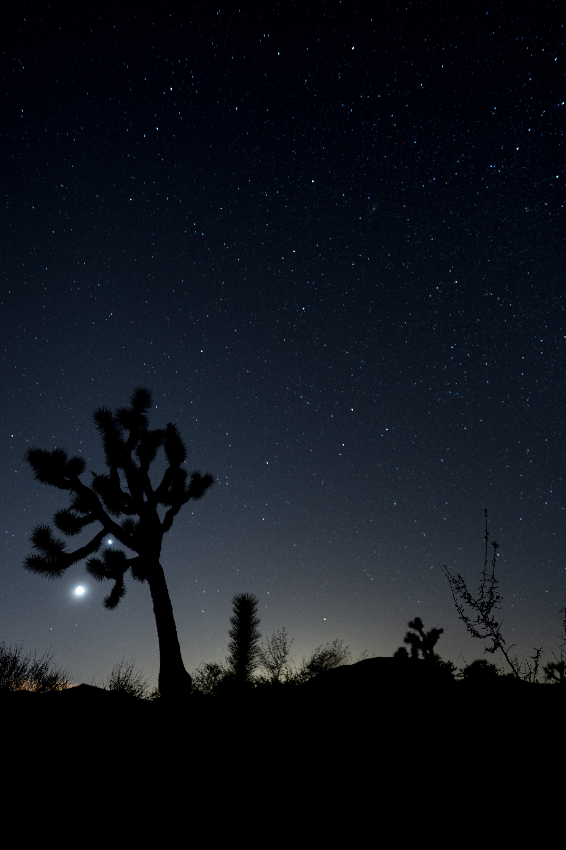 137589 скачать обои Кактусы, Ночь, Кусты, Темные, Темный, Звездное Небо - заставки и картинки бесплатно