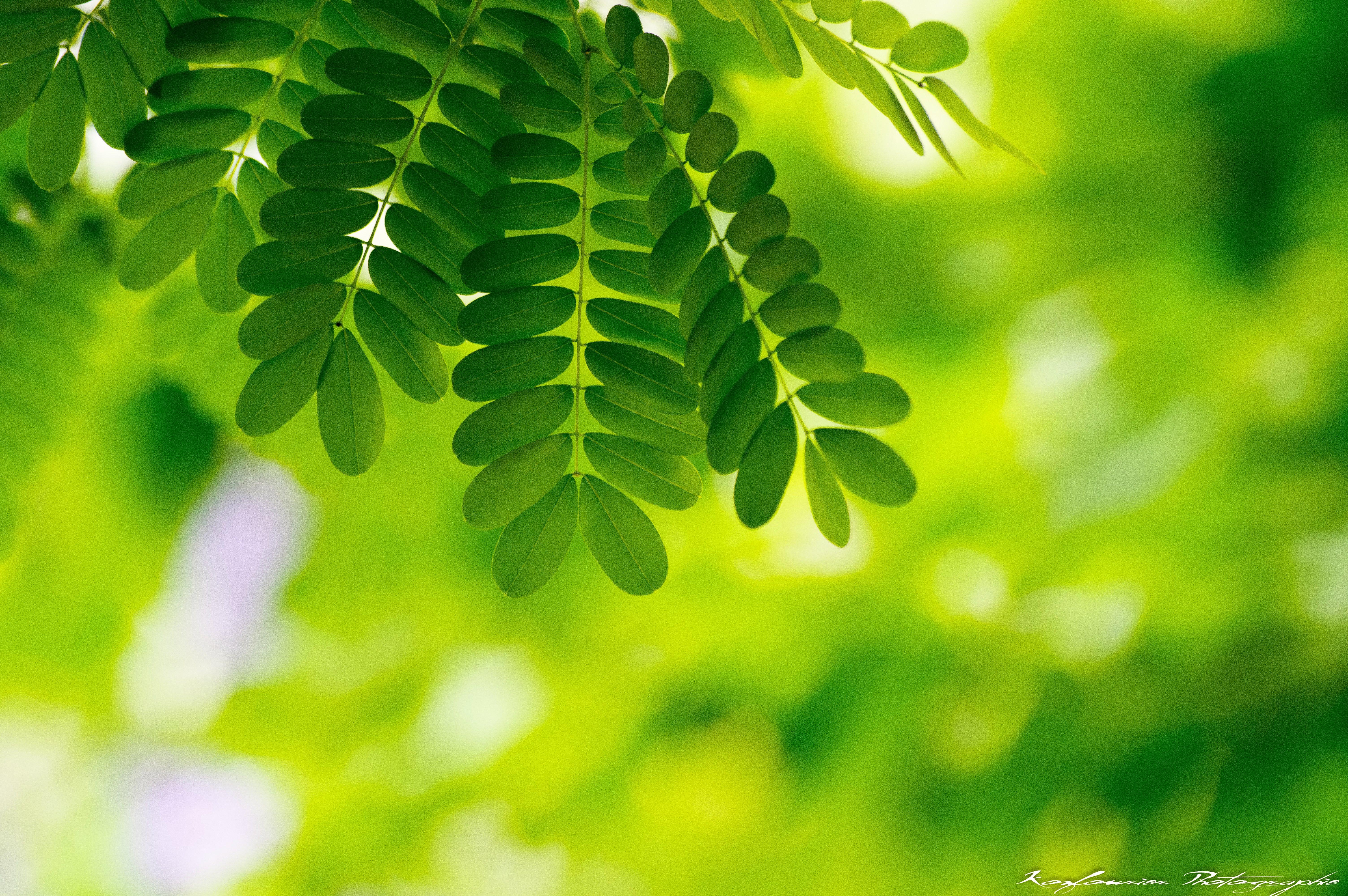 122308 скачать обои Макро, Листья, Растения, Зеленый - заставки и картинки бесплатно