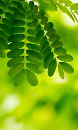 122308 descargar fondo de pantalla Macro, Hojas, Plantas: protectores de pantalla e imágenes gratis