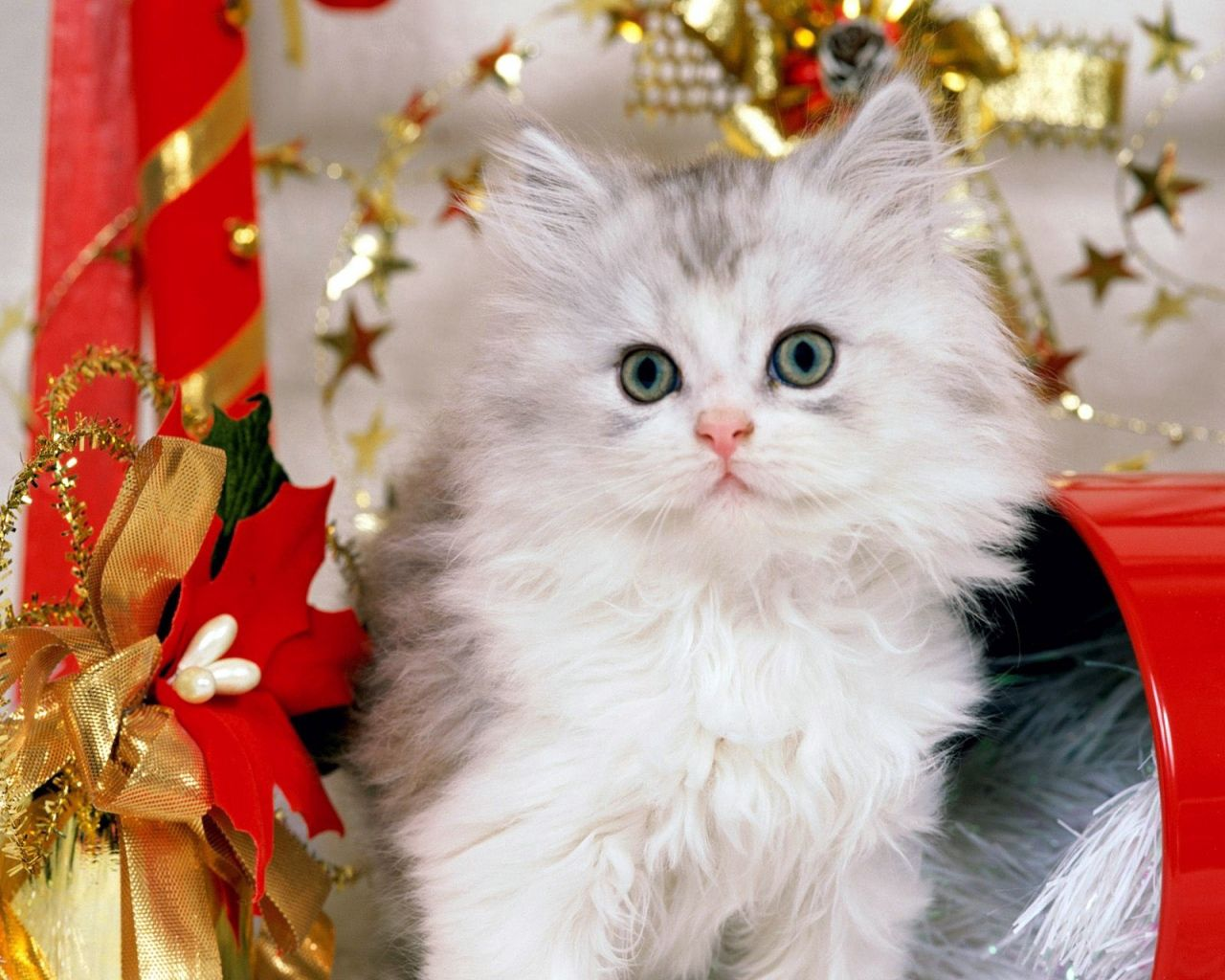 122278 Screensavers and Wallpapers Toys for phone. Download Animals, New Year, Toys, Cat, Fluffy, Bows, Presents, Gifts pictures for free