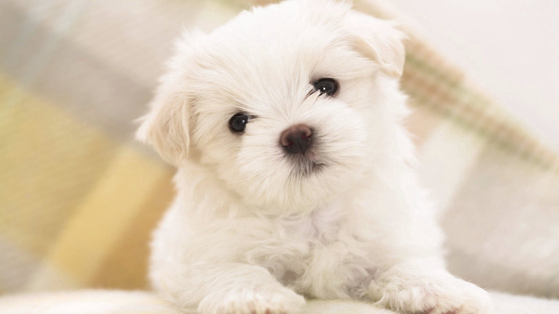72795 Screensavers and Wallpapers Puppy for phone. Download Animals, Dog, Puppy, Kid, Tot pictures for free