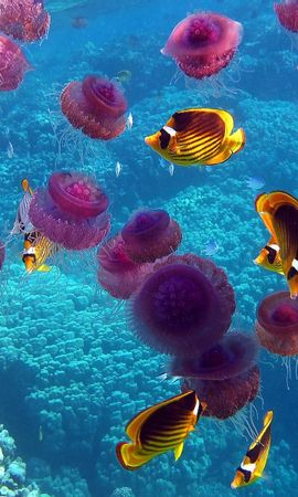 21275 download wallpaper Animals, Sea, Jellyfish, Fishes screensavers and pictures for free