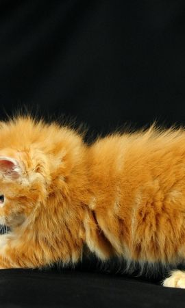 12276 download wallpaper Animals, Cats screensavers and pictures for free