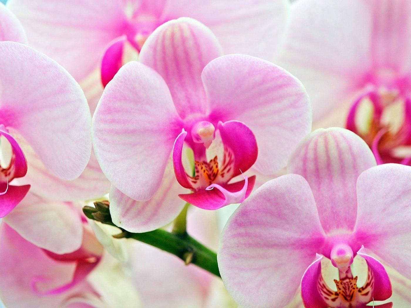 26429 скачать обои Растения, Цветы - заставки и картинки бесплатно