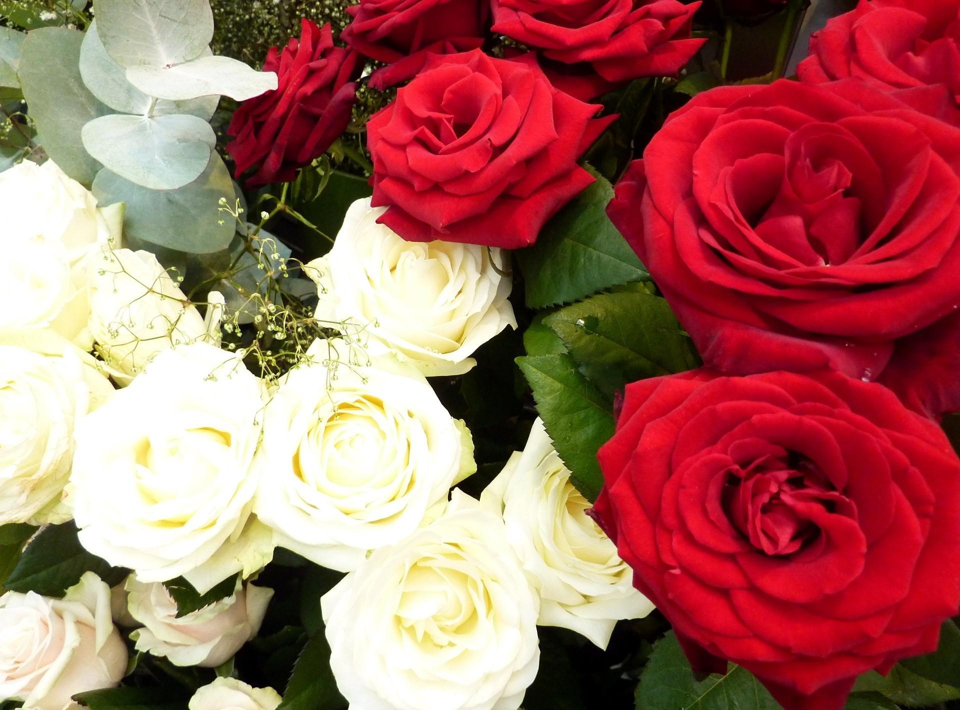 50496 скачать обои Цветы, Гипсофил, Розы - заставки и картинки бесплатно