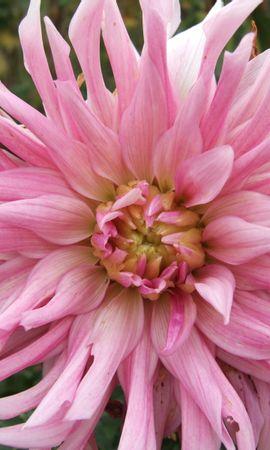 3728 descargar fondo de pantalla Plantas, Flores: protectores de pantalla e imágenes gratis