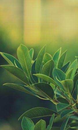 18604 скачать обои Растения, Деревья - заставки и картинки бесплатно