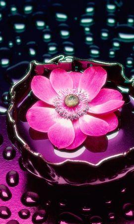 45 descargar fondo de pantalla Plantas, Flores: protectores de pantalla e imágenes gratis