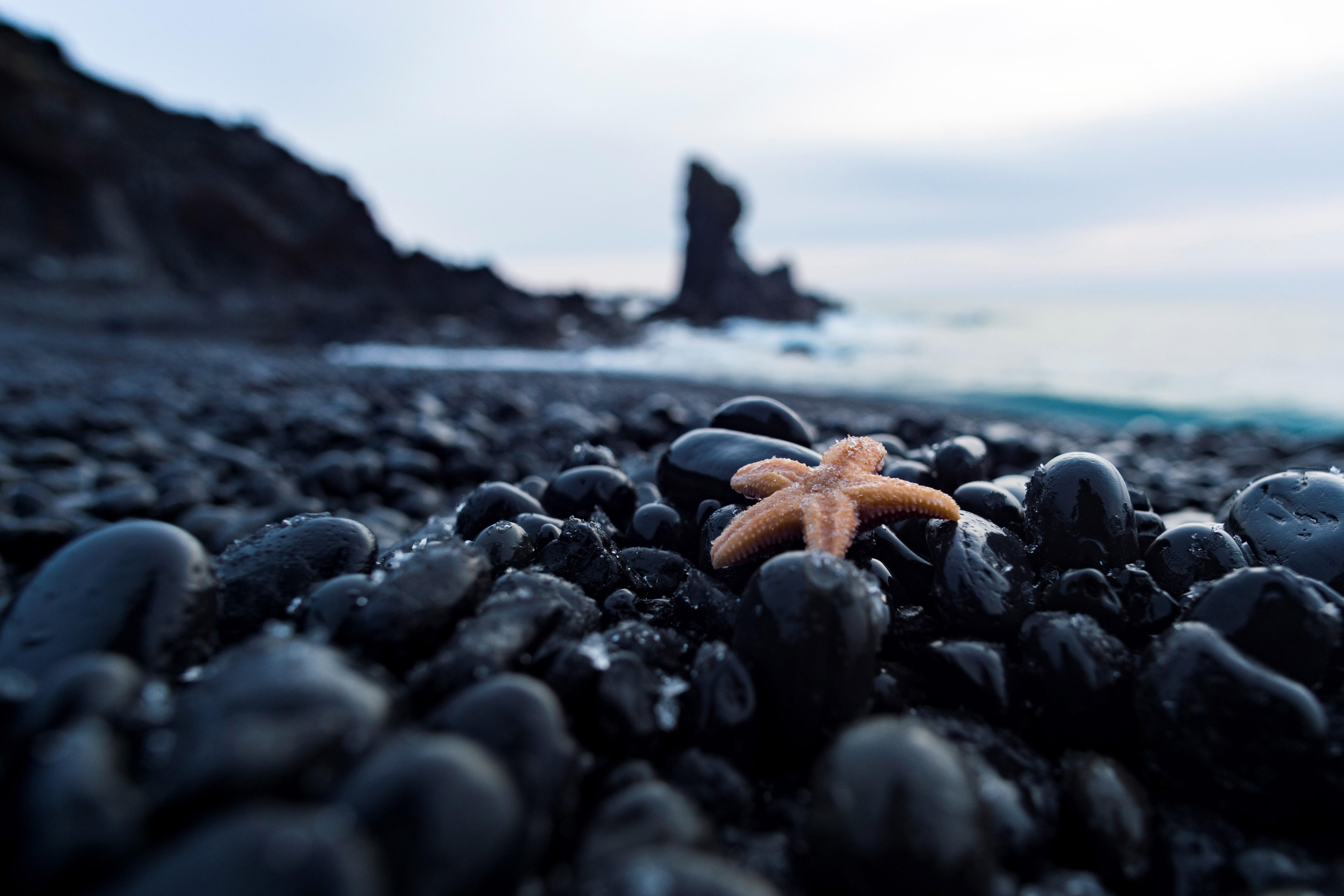 120586 download wallpaper Macro, Starfish, Pebble, Stones, Nautical, Maritime screensavers and pictures for free