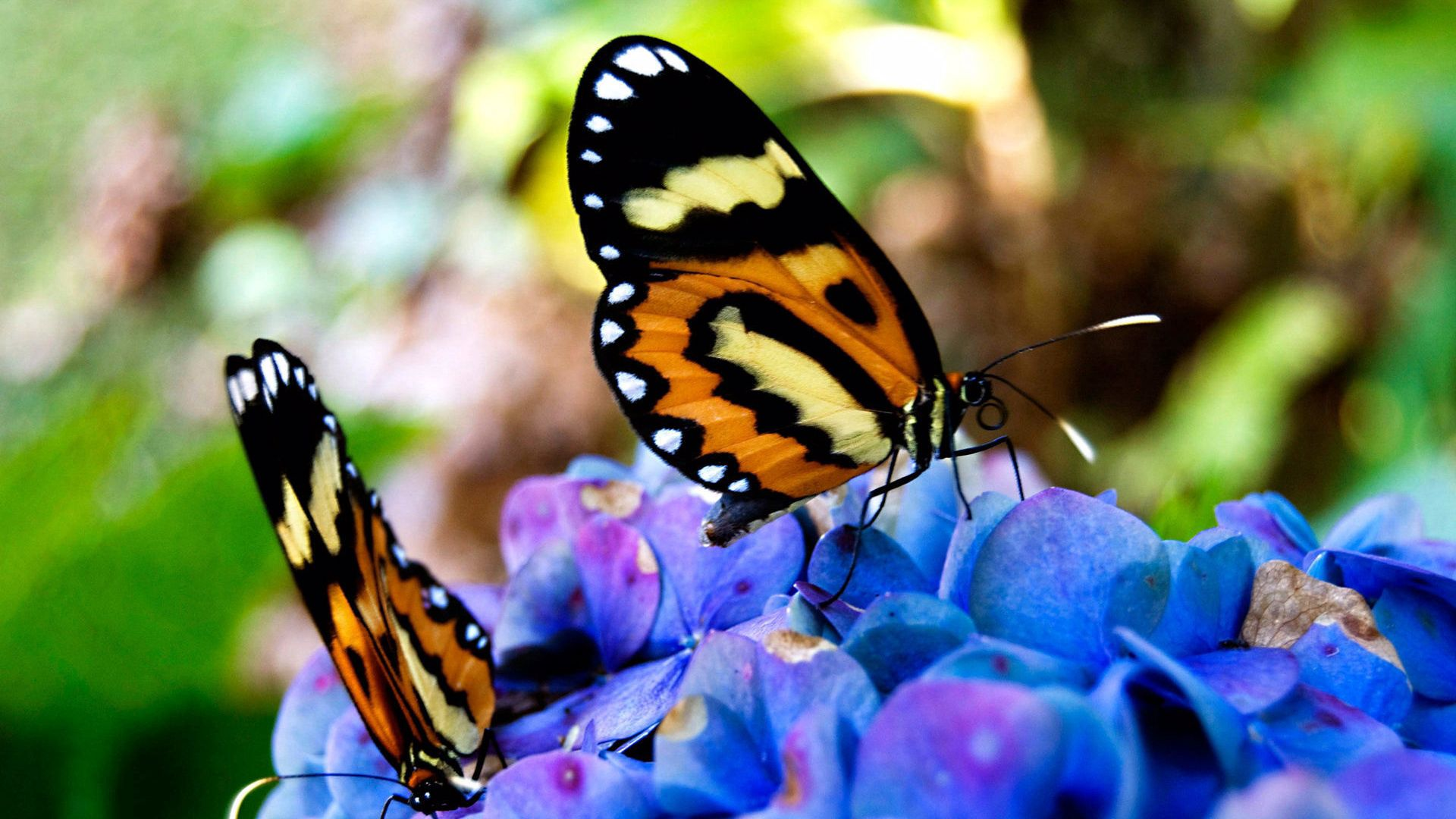 78417 Screensavers and Wallpapers Butterflies for phone. Download Macro, Beautiful, On Flowers, Sit, Butterflies pictures for free