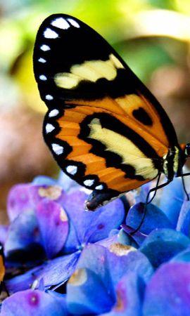 78417 descargar fondo de pantalla Macro, Hermosa, Hermoso, En Flores, Sobre Las Flores, Sentarse, Mariposas: protectores de pantalla e imágenes gratis