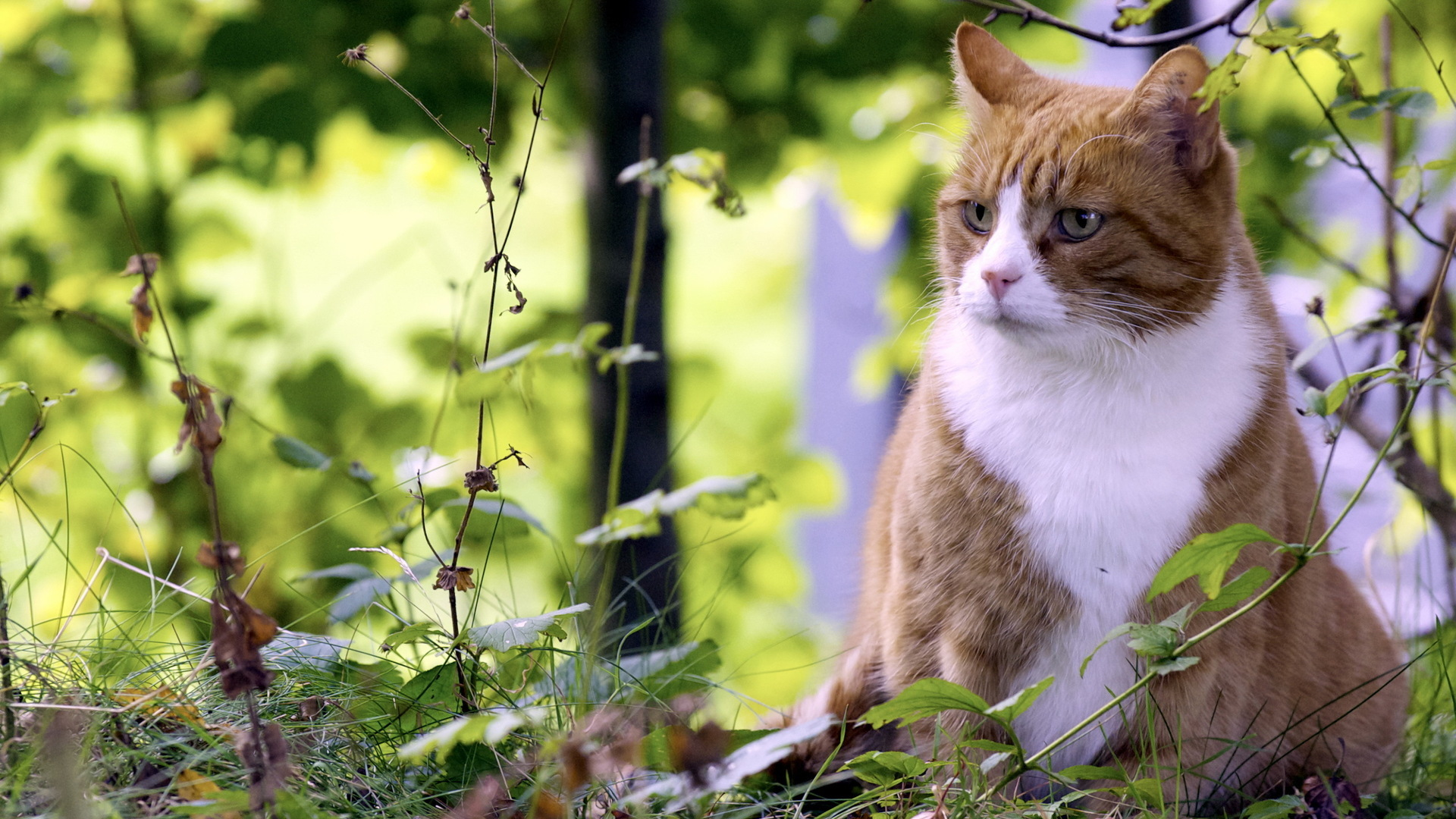 16239 download wallpaper Animals, Cats screensavers and pictures for free