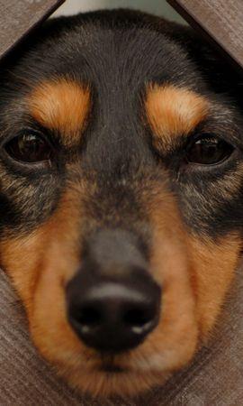 25435 скачать обои Животные, Собаки - заставки и картинки бесплатно