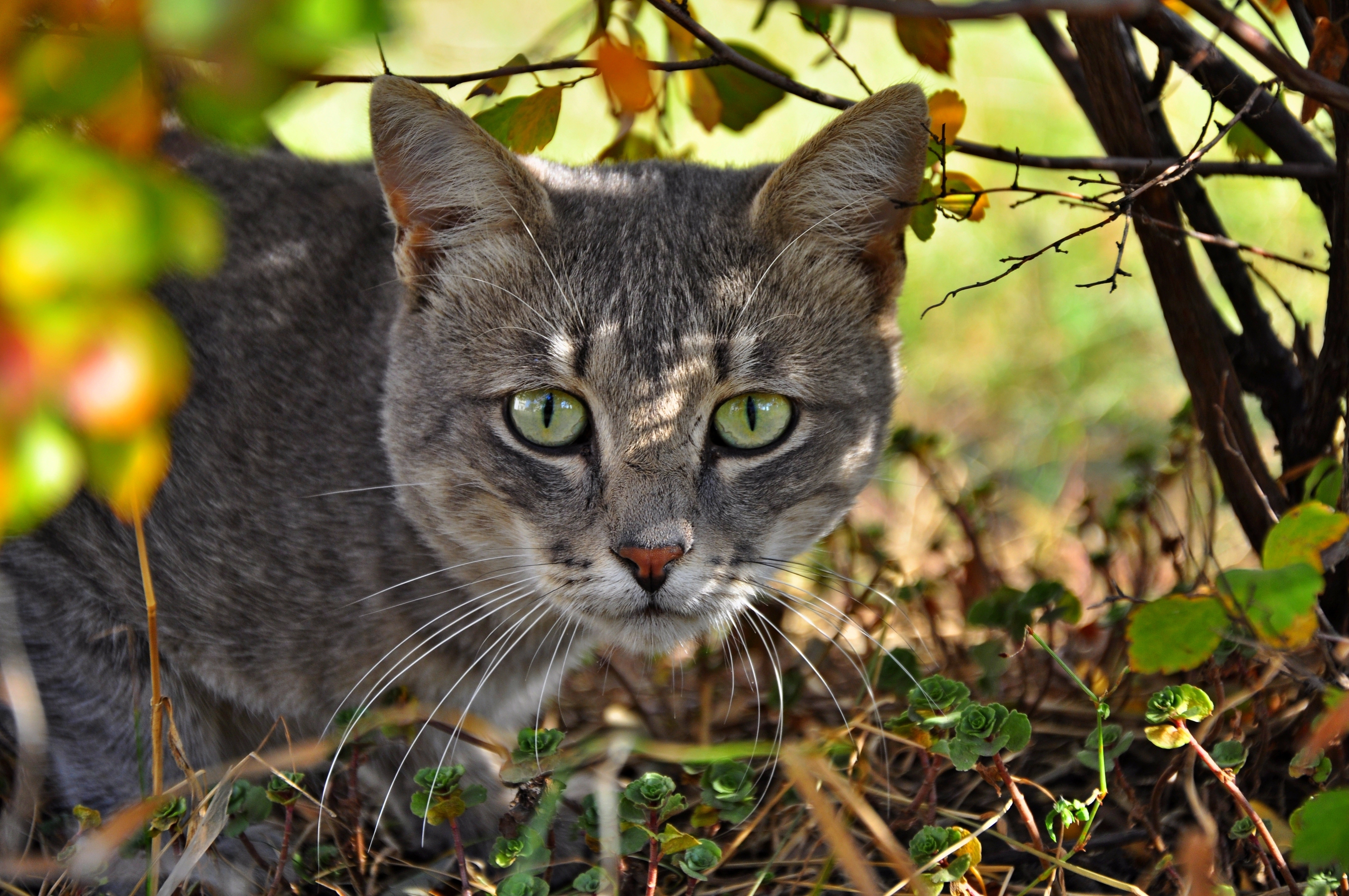 135141 download wallpaper Animals, Cat, Muzzle, Grass, Climb screensavers and pictures for free